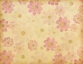Cosmea flowers — Stock Photo