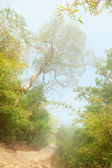 Misty morning in jungle near Umphang,Thailand. — Stock Photo