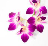 Lila orkidé — Stockfoto