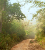Ground road in jungle near Umphang,Thailand — Stock Photo