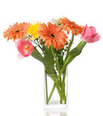 Gerberas and tulips — Stock Photo