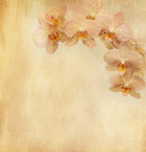 Vintage paper with orchid — Stockfoto