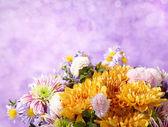 Chrysanthemums bunch — Stock Photo