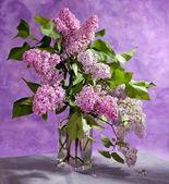 Bouquet of  purple Lilac — Stock Photo