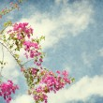 Bush of Bougainvillea flowers against the blue sky. — Stock Photo