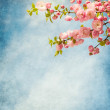Branches with beautiful pink flowers against the blue sky. — Stock Photo #41391349