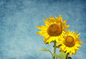 Two sunflowers against the blue sky. — Stock Photo