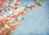 ветви с красивыми розовыми цветами против голубого неба. — Стоковое фото