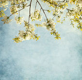 Paper background with sweet cherry blossom. — Stock Photo