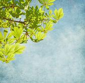 Fresh sprig of   horse chestnut on blue sky. — Stock Photo