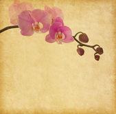 Papel velho com orquídea — Fotografia Stock