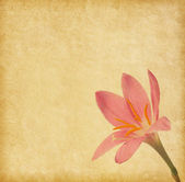 Old  paper  with light pink lily — Stock Photo