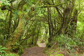 Pathway through rainforest — Stock Photo