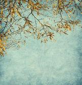 Acacia — Stockfoto