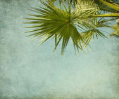Old paper with palm tree — Stock Photo