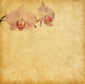 Old worn paper with orchid — Zdjęcie stockowe