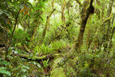 Temperate rain forest, — Stock Photo