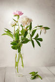 Bouquet of  pale peonies in  vase — Stock Photo