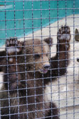 Young bear in a zoo — Stock Photo