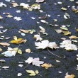 Maple Leaves on Asphalt — Stock Photo