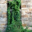 Stock Photo: Abandoned Mill Overgrown Window
