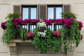 Garden on the Balcony — Stock Photo