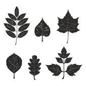 Grunge leaves silhouete set 01 — Stock Photo