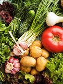 зелень и овощи — Стоковое фото