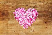 ピンクのバラの花びらの背景 — ストック写真