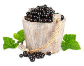 Black currant in a wooden bucket on white background — Stock Photo