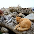 Stock Photo: Stray cats