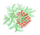 Drawing of a paint Christmas Holly — Stock Photo