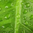 Green leaf with water drops close up — Stock Photo