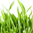 Fresh spring green grass — Stock Photo #22847080