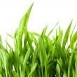 Fresh spring green grass - Foto Stock