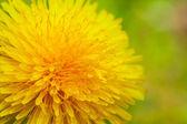 Yellow flower — Stock Photo