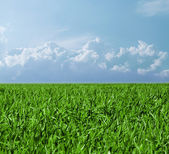 Field with a green grass and the beautiful sky — Stock Photo