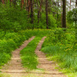 Walkway in forest — Stock Photo