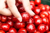 Cherry in woman hand — Stock Photo