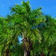 Stock Photo: Palm against blue sky