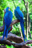 Two of beautiful parrots — Stock Photo