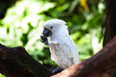 White of beautiful parrot — Stock Photo