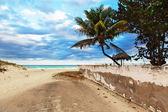 Palmeras en la playa — Foto de Stock