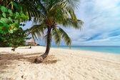 棕榈树的沙滩上 — 图库照片