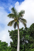 Palma en día soleado — Foto de Stock
