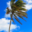 Beautiful palm tree — Stock Photo
