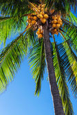Palm against blue sky — Stock Photo