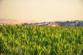 Summer landscape near Kastoria — Stock Photo