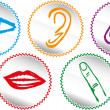 Five senses icon set - Vector Illustration — Stok Vektör