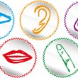 Five senses icon set - Vector Illustration — Imagen vectorial